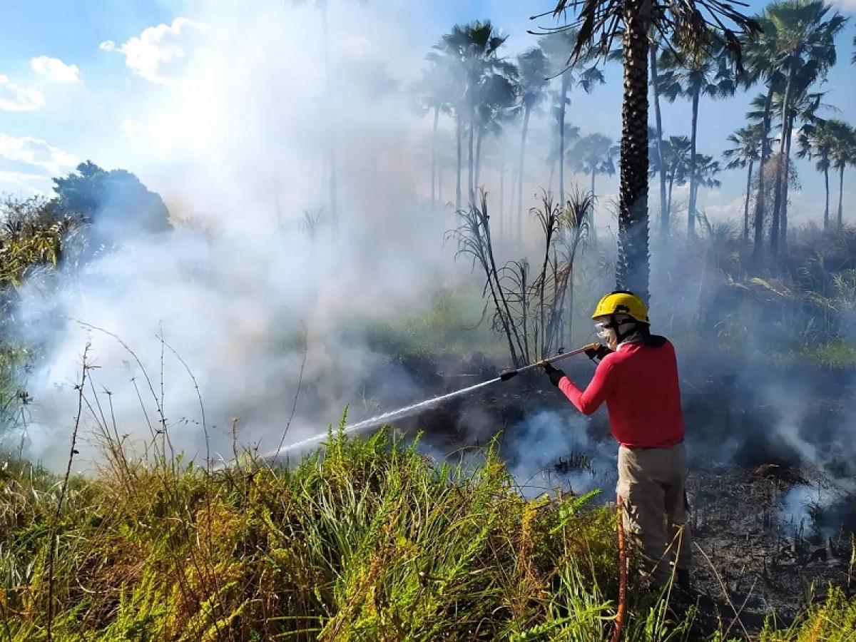 Em uma semana, Corpo de Bombeiros registra 101 incêndios florestais no RN