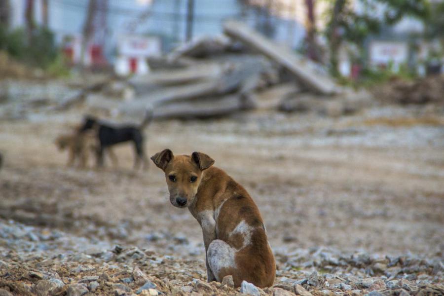 Bancada de Allyson derruba proposta que tiraria R$ 2 milhões da propaganda para investir na causa animal